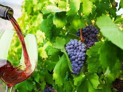13/10/2017: Feestelijke wijnreisavond